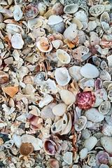 Captiva Sea Shells (delaphotography) Tags: sea vacation shells beach florida sigma captiva foveon x3 dp2 41mm sigmadp2