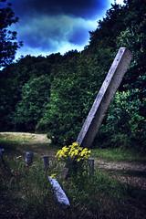 Yellow Flower & Post