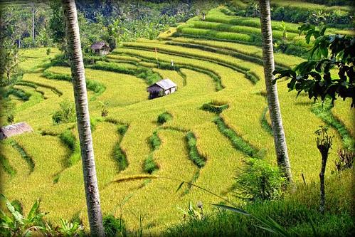 Green Cascades | Sideman | East Bali