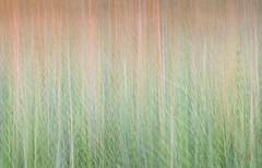 Long Point - Grass at Sunset (barbdpics) Tags: multipleexposures longpointprovincialpark whatmakesyouhappy travelontario nikond300s artnetcomtemporaryartists travelnorfolkcounty barbdpics