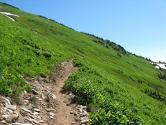 steep meadows of White Mtn