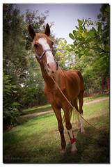 1 Horse Power