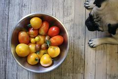 Thumbnail image for Tomatoes, Anyone?