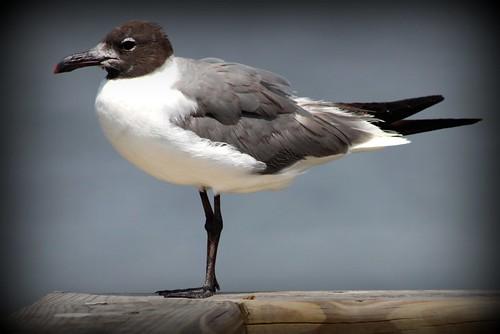 Bird on Pier III