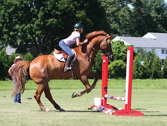 Jumping Clinic (I Dream in Horses) Tags: school red people horse white cute english girl fence caballo bay jump jumping pad fences chestnut lesson toffee leap learn saddle bridle hunterjumper girth gelding martingale