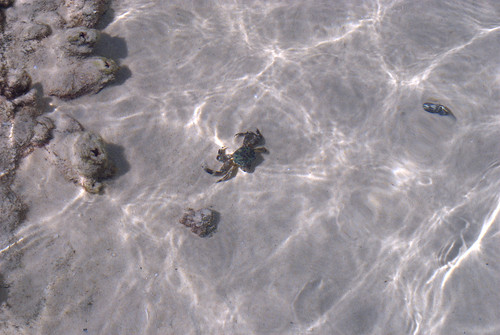 Fraser Island: Champagne Pool