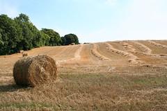 Harvest Time (Ken Meegan) Tags: trees tree field straw hay haybale strawbale harvesttime cowexford saltmills 1582010