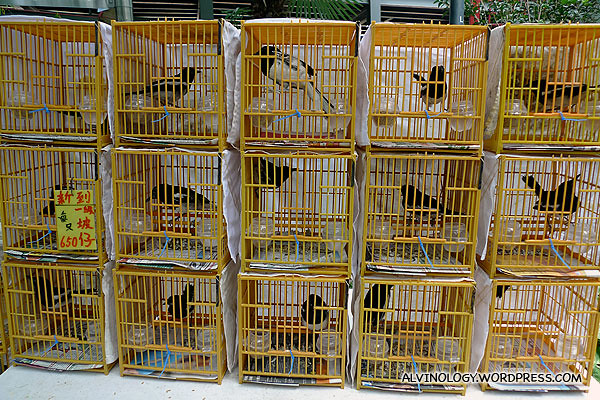 Caged birds for sale
