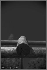 Rumo ao Cu (Mgoncalles) Tags: macro abandoned close pentax pb limited pretoebranco solido lightroom simbolismo abandonado naturezamorta k100d mandaguari 43mmlimited justpentax dofcurto pentaxart