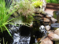 'practically perfect' little pond (PermaCultured) Tags: city trip green smart blog community tour gardening sydney organic lush communitygarden permaculture sustainability peakoil kitchengarden urbangardening foodgarden citygardens foodproduction permacultured foodgrowing