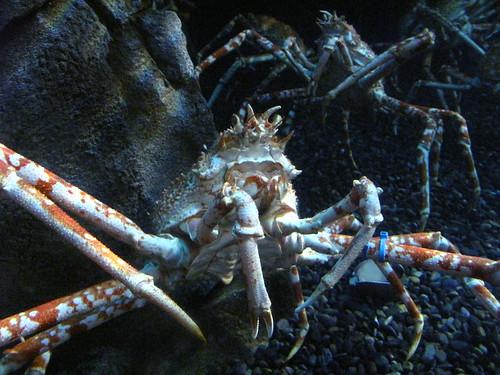 Georgia Aquarium 22