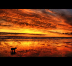 Special mornings (Martyn Starkey) Tags: dog king charles spaniel cavalier mywinners colorphotoaward saariysqualitypictures jorjasunriseholidaybeachfiley