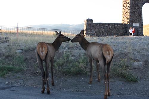 Kissy Elks