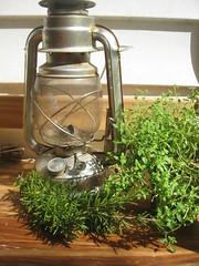 Herb Lamp