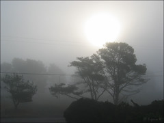 Early morning in San Simeon (Genie W.) Tags: california trees fog canonpowershots45