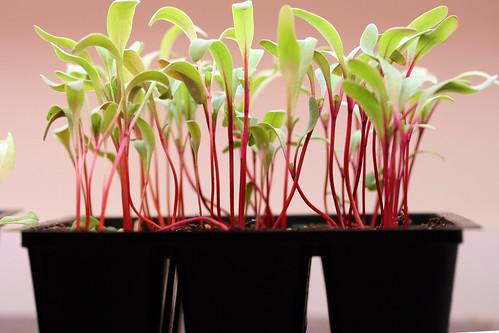 seedlings 3