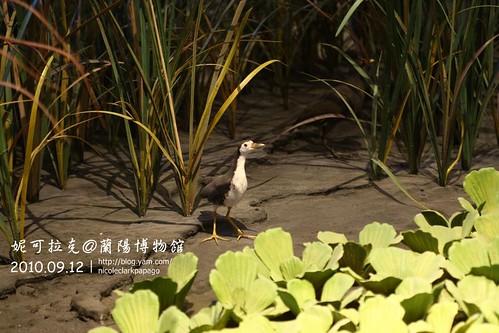 蘭陽博物館20100912-053