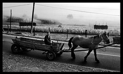 Where are we going? (F L I R S T - Palk Clap) Tags: nature rural romania tradition plowing cavallo pastore woodworkers maramures calesse blackwhitephotos agriculturaltradition