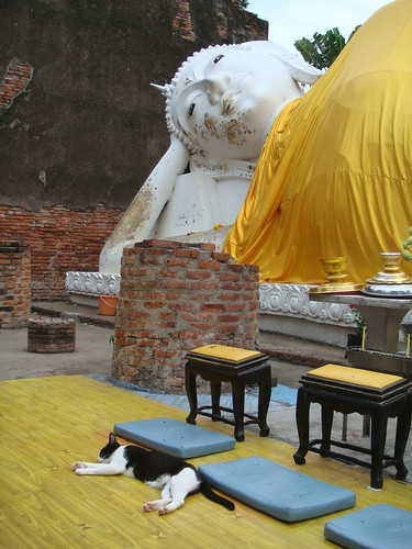 Thailand: The Sleeping Buddha and The Sleeping Cat by Song About Jen