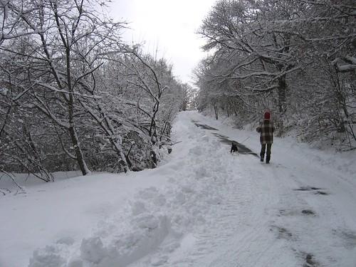 新雪の山荘周辺を散歩 2009.1.19 by Poran111
