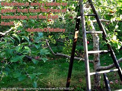 Education is only a ladder (klmontgomery) Tags: education quote september ladder 2010 klmonty klmontgomery