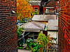 Toronto's West End (A Great Capture) Tags: autumn homes house toronto ontario canada brick fall wall brickwalls walls residential westend on ald ash2276 ashleyduffus ©ald ashleysphotographycom ashleysphotoscom ashleylduffus wwwashleysphotoscom