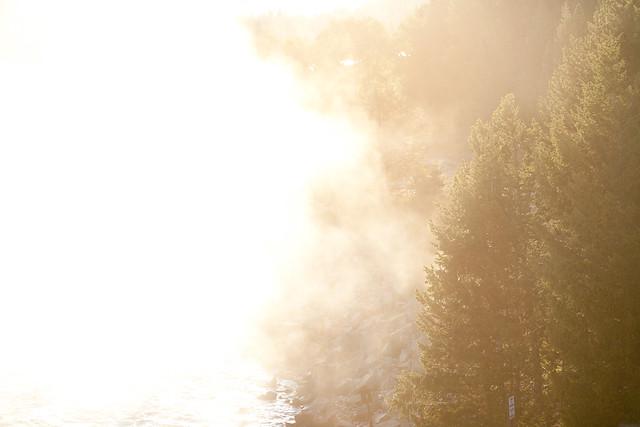 Trees, at dawn