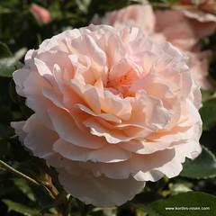 the world 39 s best photos of rose and z chterwkordess hne. Black Bedroom Furniture Sets. Home Design Ideas