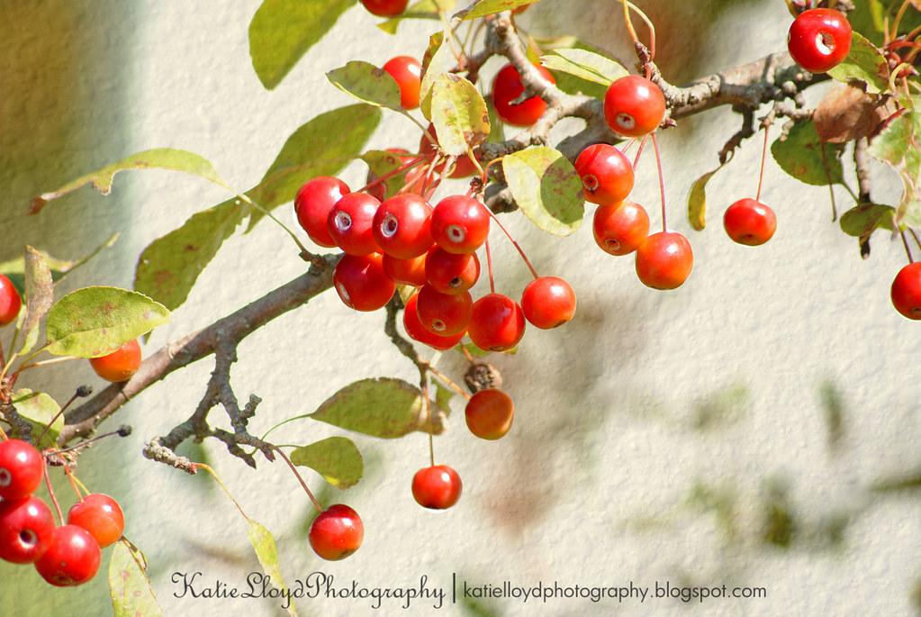 Cherries with texture - wm