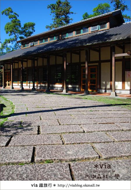 【溪頭一日遊】森林中的夢幻校園~內湖森林小學15