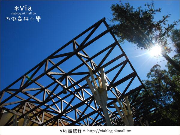 【溪頭一日遊】森林中的夢幻校園~內湖森林小學39