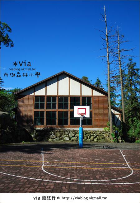 【溪頭一日遊】森林中的夢幻校園~內湖森林小學45
