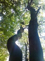 Trees (BeritBjork) Tags: trees summer sunlight leaves skne sweden sverige trd sommar lv solsken