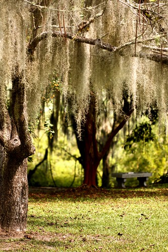 spanish moss and bench