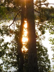 between the lines (ailie*) Tags: trees sunset summer orange sun sunlight lake water leaves pretty glow bright space branches calm shining ailie temagami