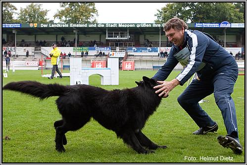 Deutsche Schäferhunde - SV BSP/Agility Meppen 2010