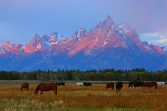 IMG_7603 Sunrise, Grand Teton National Park (ThorsHammer94539) Tags: park canon is grand national usm teton coth 1585mm coth5 ringexcellence dblringexcellence tplringexcellence eltringexcellence