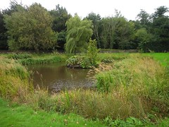 Village pond Photo