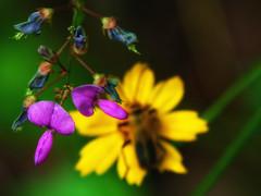 Purple with Blue (dbnunley) Tags: flower macro beetle finepix blueridgeparkway hs10 nikcolorefexpro