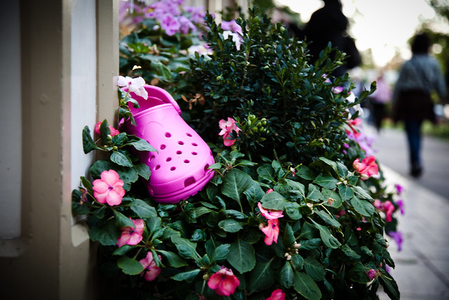 Pink Croc [EOS 5DMK2 | EF 24-105L@65mm | 1/40 s | f/4 | ISO400]