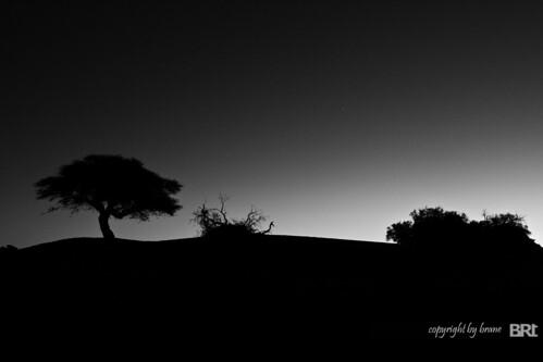 trees_02