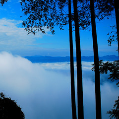 Cloud sea (unlimited inspirations) Tags: china travel blue trees summer sky white mist mountains art tourism nature beautiful beauty fog clouds forest landscape scenery asia flickr colours bamboo best imagination sichuan depth height attractions cloudsea wow1 wow2 wow3 wow4 sunlights wow5 wowhalloffame unlimitedinspirations mygearandmepremium mygearandmebronze mygearandmesilver mygearandmegold mygearandmeplatinum mygearandmediamond mygearandmeplatinium southernsichuanbamboosea artistoftheyearlevel3 artistoftheyearlevel4 flickrstruereflection1 flickrstruereflection2 flickrstruereflection3 flickrstruereflection4 flickrstruereflection5 flickrstruereflection6 flickrstruereflection7 artistoftheyearlevel5 flickrstruereflectionexcellence artistoftheyearlevel7 artistoftheyearlevel6 rememberthatmomentlevel4 rememberthatmomentlevel1 rememberthatmomentlevel2 rememberthatmomentlevel3 rememberthatmomentlevel7 rememberthatmomentlevel5 rememberthatmomentlevel6 rememberthatmomentlevel8 vigilantphotographersunite vpu2 vpu3 vpu4