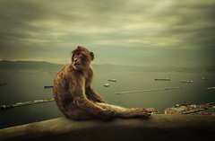 gibraltar (/pol) Tags: ocean sea sky animal monkey bay spain mare looking ships watching cielo ape gibraltar navi animale spagna nationalgeographic oceano barbaryapes seduto scimmia gibilterra algersiris guaradre