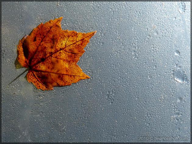 P1110984_leaf