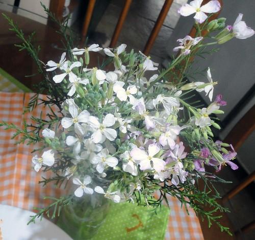 Flores de rabanete