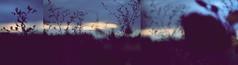 Si d'un grain de beauté... (Michel DA SILVA) Tags: france lens 50mm europa europe pentax 7d francia pentaxlens smcpm50mmf17 canoneos7d micheldasilva wwwdasilvamichelcom smcpentaxasahi