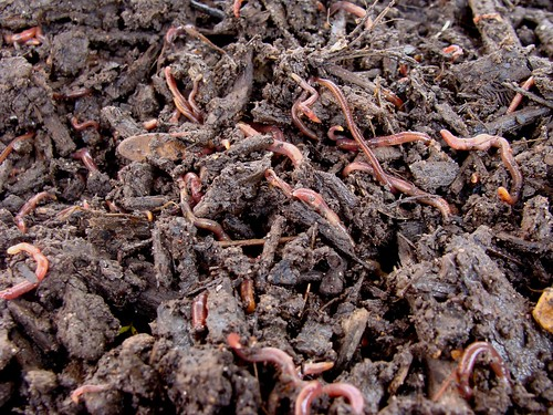 Pile of Worms
