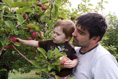 applepicking10