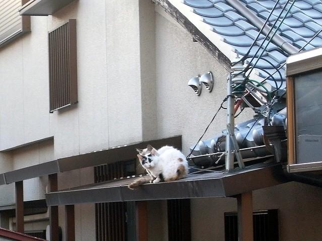 Today's Cat@2010-09-27