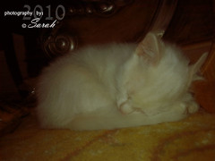 sweet kitty (Sarah Altamimi) Tags: cute sarah cat sleep kitty